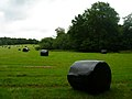 Wrapped Bales near Kingsdown Farm - geograph.org.uk - 505408.jpg