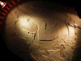 <i>Sciurumimus</i>