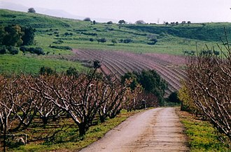 Yuval - Image: Yuval Orchards