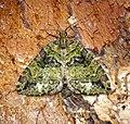 (1777) July Highflyer (Hydriomena furcata) (27916062650).jpg
