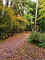 (PL) Polska - Warmia - Las Miejski w Olsztynie - The City Forest in Olsztyn (X.2012) - panoramio (1).jpg