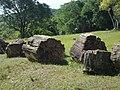 Árvores fossilizadas.jpg