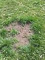 Čarodějné kruhy v Lublaňské (004).jpg