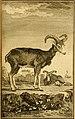 Œuvres complètes de M. le C(om)te de Buffon - histoire des animaux quadrupèdes (1775) (14595057390).jpg