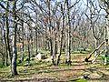 Аю-Даг - ліс на вершині-1.JPG