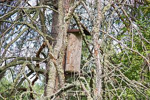 Shulgan-Tash Nature Reserve - Apiculture (Beekeeping) in Shulgan-Tash
