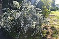 Ботанічний сад в Сумах.jpg