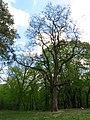 Голосіївський парк IMG 8443.jpg