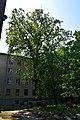 Дуби Фролькіса DSC 0884.jpg