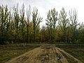 Зауральная роща в сентябре - panoramio (3).jpg