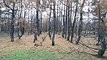 Лиса гора згорівший ліс.jpg