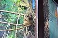 Московский зоопарк. Фото 39.jpg