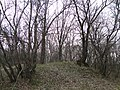 "Парк ""Динамо"". Апрельский вечер - panoramio.jpg"