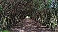 Парк зрощувального садівництва 2.jpg