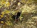 Пештера Рамниште 02.jpg