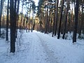 Просека в Балатовском лесу, начало февраля 2012 - panoramio.jpg