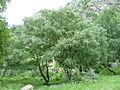 Северный Кавказ13.JPG