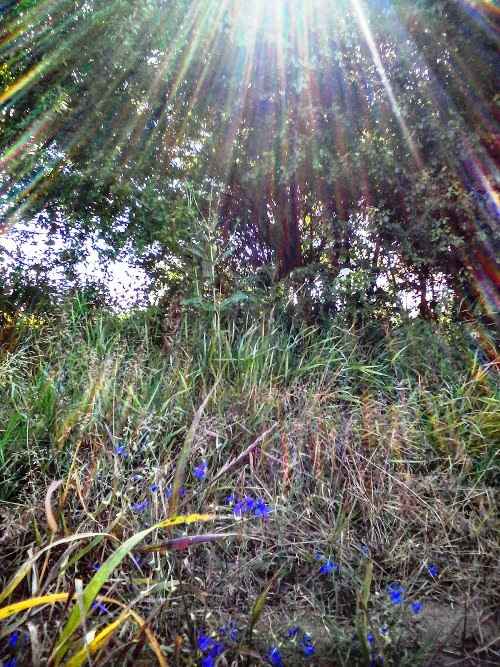 Специјални резерват природе Брзанско Моравиште, игра светлости