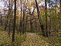 Украина, Киев - Голосеевский лес 135.jpg