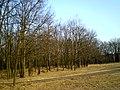 У дуброўскім лесе - panoramio.jpg
