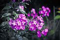 Цветок ботанического сада 11.jpg