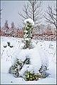Ялинка і сніг.jpg