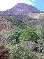 دلدوم - panoramio.jpg