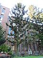 台大森林系館外樹木.JPG