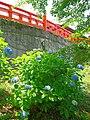 大橋脇のあじさいの花 吉野山にて 2013.6.17 - panoramio.jpg