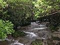 小七孔水上森林.jpg