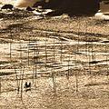 小浩滩涂6-爵士鼓手 - panoramio.jpg