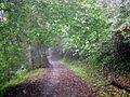 幽靜的瓦拉米步道 - panoramio.jpg