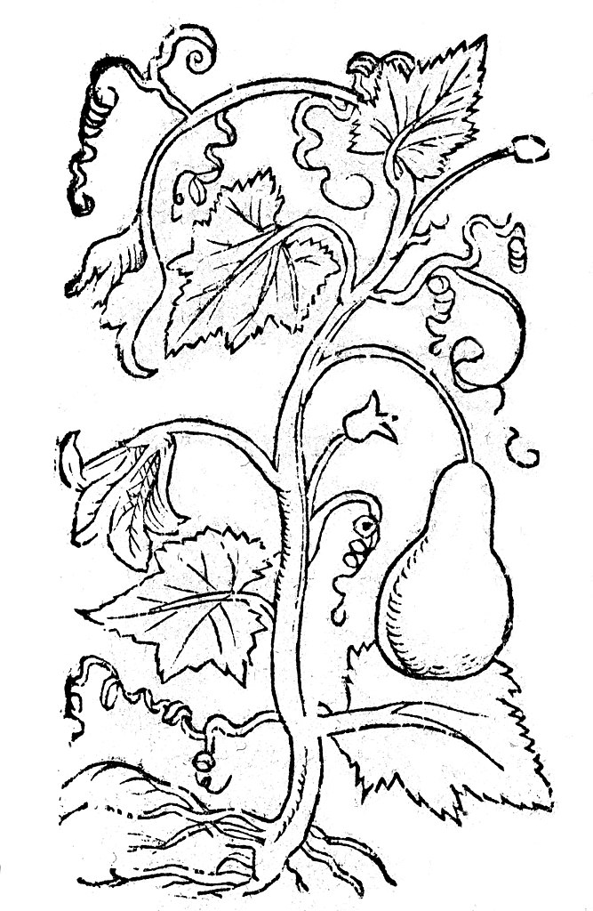 667px 04 Zucca Coloring Book BCT 2017