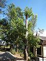 06017jfBahay Puso Virgen Milagrosa Rosario Seminary Balanga City Bataanfvf 21.JPG