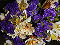 09621jfClose-ups of Limonium Alstroemeria flowersfvf 08.JPG