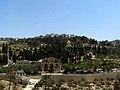 1-3000-701 - כנסיית גת שמנים-כנסיית כל העמים - לריסה סקלאר גילר (2).jpg