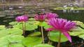 1.Caracas botanical garden jardin botanico ucv venezuela.png