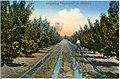 """15299-Mildura-1912-Irrigating """"Apricots""""-Brück & Sohn Kunstverlag.jpg"""