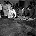 18.05.76 à l'école vétérinaire de Toulouse, opération d'un brocard jeune cerf (1976) - 53Fi904.jpg