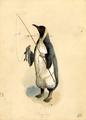 1896 Proteus Penguin Costume.png
