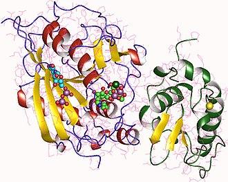 Lactose synthase - Image: 1o 23
