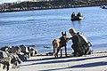 1st MSOB Canine Handler Surf Passage and Zodiac insert training 160209-M-AX605-044.jpg