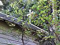 2002 08 30 31 Lea Gjølanger Kapell Ekst02.JPG