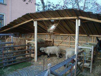 20111125Hockenheim2.jpg