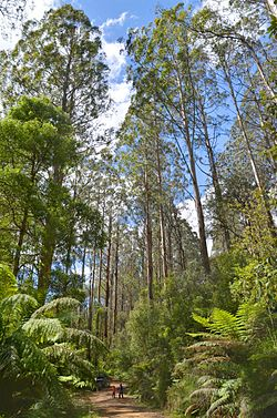 20124-01-04 Toolangi tree house 600 2810 1 2 (Soft 4).jpg