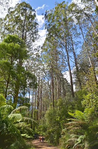 Central Highlands (Victoria) - Toolangi State Forest