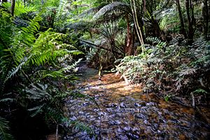 Toolangi State Forest - Yea River along Yea Link Road track near Little Red Toolangi Treehouse