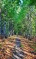 2012 Kocobędz, Ścieżka w lesie (01).jpg