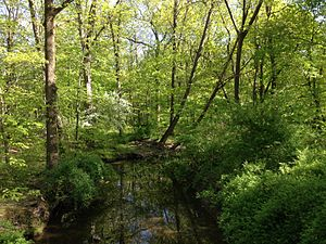 Ewing Township, New Jersey - Woodlands along West Branch Shabakunk Creek represent what Ewing looked like before Europeans arrived