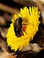 2014-03-10 12-44-45 insecte-fleur.jpg